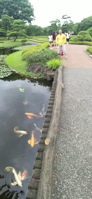 ...Gică, peștele de aur!